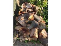 Free beech wood!