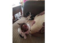 £50 kittens 3 females 1 male