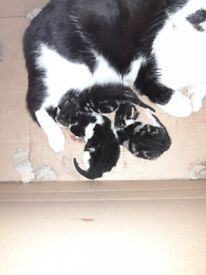 Gorgeous kittens looking for forever homes