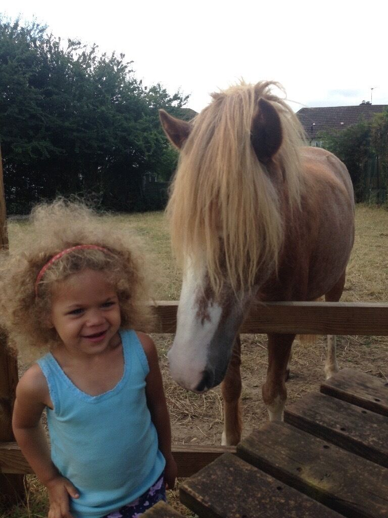 Pony rides in Shotover country park today with pony pursuitsin Oxford, OxfordshireGumtree - Pony pursuits are offering rides in Shotover country park and we have some availability today and tomorrow ) Taster rides £3 woodland rides £17.50 please call to book )