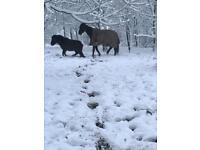 Project pony