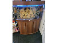 Jewel 180l bow front aquarium with cabinet setup
