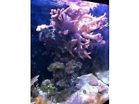 Mature marine fish tank