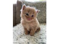 Kittens in Norwich, Norfolk | Cats & Kittens for Sale - Gumtree