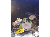 corals and fish for sale