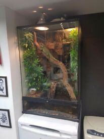 Chinese water dragon with full setup. £170!!