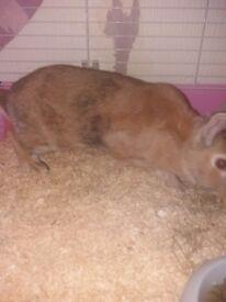female rabbit and set up