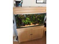 Large fish tank aquarium - complete kit / setup