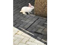 Rabbits 🐇