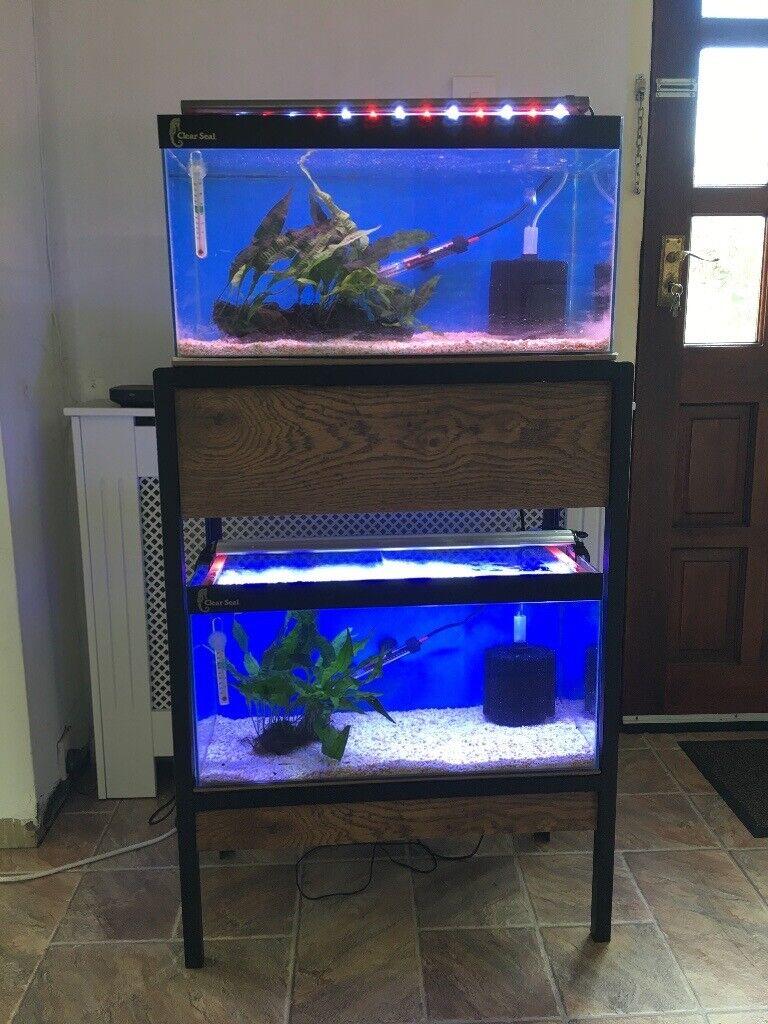 Fish tanks for breeding