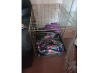 """Dog cage/crate in good used condition. Measurements 21""""×24""""×31"""". Must go by Saturday!"""