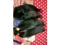 Weaves and wigs for sell