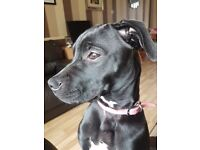 7 months puppy