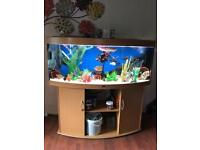 5ft jewel bowed fronted tank