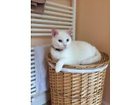 Good home needed for deaf cat