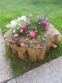 Log planters including flowers