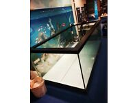 Custom Built Fish Tanks and Vivariums for Sale