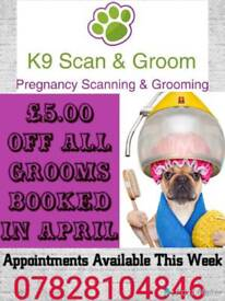 K9 Scan & Groom