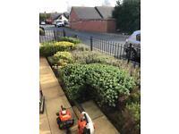 Garden tidy ups from £20 tidy ups 07544043984