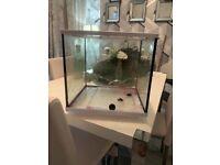 35 litre fish tank