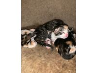 Beautiful kittens all sold