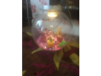 for sale 30 Litre Bio Orb Fish Tank with light and heater /pump etc £30