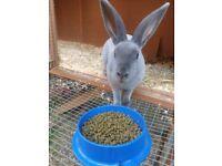 Lovely male rabbit