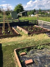 Wanted wood chips / bark for allotment paths