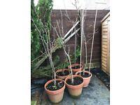 5 fruit trees