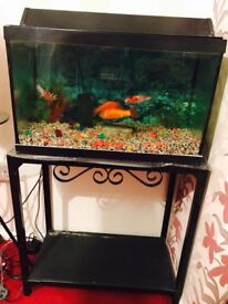 Fish tank including fishes