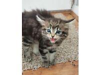 Adorable cross kittens