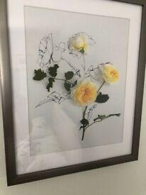 Anna Newell Rose prints