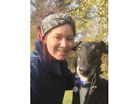 Friendly professional dog walking/pet sitting norwich/norfolk