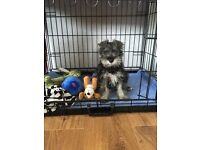 Dog crate perfect condition