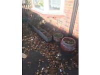 Plant pots / planters concrete