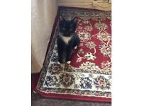 Cats 5-6 months free to good home
