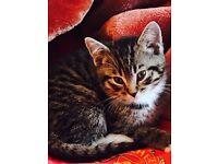 I have Georgous male kittens fluffy