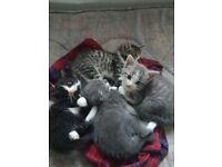 Cute kittens seeking new home