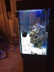 juwel vision 260 bow fronted aquarium