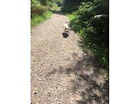 Animal loving dog walker