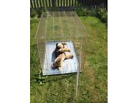 X Large Dog Cage / Crate