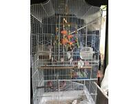 BIRD CAGE WITH STAND & FINCHES