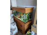 Fluval Light Oak Aquarium 500 litres
