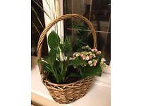 House Plant Arrangement