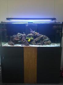 Bargain 5x2x2 reef tank