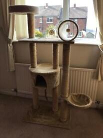 Cat Activity Tree