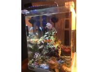 Nice marine fish tank bargain