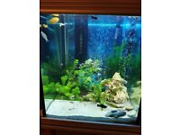 Excellent high quality 226L tank. 3d glass .£480 ono. Can be used for tropical / cold water fish