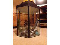 Hexagonal fish tank