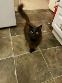 Cat requiring new home
